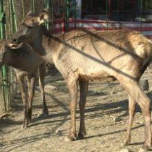 Директора зоопарка Душанбе уволили после гибели животных. ВИДЕО